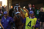 Mucho Macho Man heading to the walking ring before going to the track to win the Florida Sunshine Millions Classic at Gulfstream Park, Hallandale Beach Florida. 01-18-2014