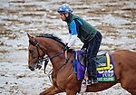 October 27, 2015 :  Twilight Eclipse, trained by Thomas Albertrani and owned by West Point Thoroughbreds, Inc., exercises in preparation for the Longines Breeders' Cup Turf at Keeneland Race Track in Lexington, Kentucky on October 27, 2015.  Scott Serio/ESW/CSM