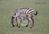 Dr. Xiong, ANIMALS, wildlife, photos, AUJX139,#a#