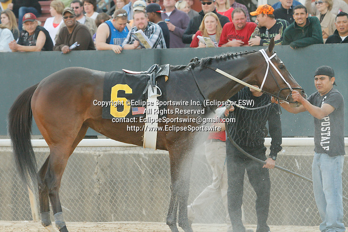 #6 Euphrosyne after winning the Honeybee Stakes (Grade III) under an objection at Oaklawn Park in Hot Springs, Arkansas-USA on March 8, 2014. (Credit Image: © Justin Manning/Eclipse/ZUMAPRESS.com)