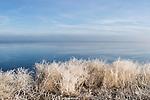 Partially frozen plants along wetland, Tule Lake National Wildlife Refuge, California