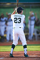 Chicago State Cougars left fielder Jacob Vanitvelt (23) at bat during a game against the Georgetown Hoyas on March 3, 2017 at North Charlotte Regional Park in Port Charlotte, Florida.  Georgetown defeated Chicago State 11-0.  (Mike Janes/Four Seam Images)