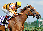 Wise Dan with Jon Court up wins the G2 Firecracker Handicap at at Churchill Downs in Louisville, Kentucky on Monday July 4, 2011.