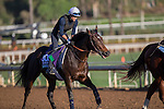OCT 29 2014:Flintshire, trained by Andre Fabre, exercises in preparation for the Breeders' Cup Turf at Santa Anita Race Course in Arcadia, California on October 29, 2014. Kazushi Ishida/ESW/CSM