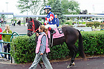 Callisto(8) with Jockey Taylor Rice aboard at  the Natalma Stakes at Woodbine Race Course in Toronto, Canada on September 13, 2014 with Jockey Patrick Husbands aboard.