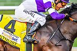 HALLANDALE BEACH, FLORIDA - APRIL 2:  Nyquist #4, ridden by Jockey Mario Gutierrez, coming around the final turn, and eventually winning the Florida Derby at Gulfstream Park on April 2, 2016 in Hallandale Beach, Florida (photo by Douglas DeFelice/Eclipse Sportswire/Getty Images)
