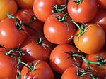 Deutschland, Tomaten   Germany, tomatoes