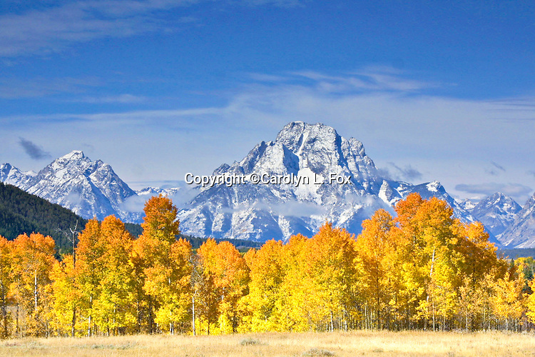 Mount Moran is part of the Grand Teton Mountain Range in Grand Teton National Park in Wyoming. Fall trees adorn the beautiful landscape.