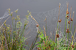 Spider web in grasses on the water's edge.