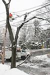 Tree branch down across street. Winter.