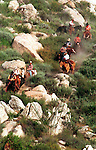 Cowboys ride down hill on cattle drive roundup California, roundup, cattle drive, cowboy, cowboys, roundup, wild west, California, West Coast of US,most populous US State, Colonize Spanish Empire, Mexican-American War, 31st State, Septemeber 9, 1850, Redwood-Douglas fir forests, Sierra Nevada Mountain range, Mojave desert, Death Valley, agricultural, tourism, entertainment, Golden State, California, Fine Art Photography by Ron Bennett, Fine Art, Fine Art photography, Art Photography, Copyright RonBennettPhotography.com © Fine Art Photography by Ron Bennett, Fine Art, Fine Art photography, Bennett, Art Photography, Copyright RonBennettPhotography.com ©