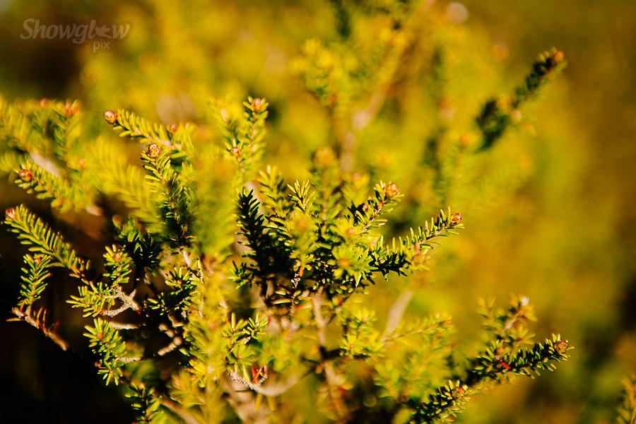 Image Ref: CA915<br /> Location: Dunkeld<br /> Date of Shot: 17.08.19