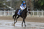NEW ORLEANS, LA - JANUARY 21:<br />  Western Reserve #3 ridden by Shaun Bridgmohan during the Colonel E.R. Bradley Handicap at the Fairgrounds Race Course on January 21,2017  in New Orleans, Louisiana. (Photo by Steve Dalmado/Eclipse Sportswire/Getty Images)