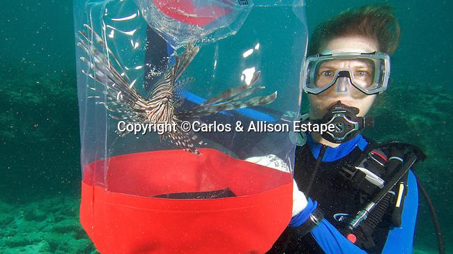 Diver with captured Lionfish, Islamorada, Florida