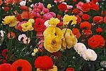 Springtime flowers.