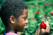 MR / Schenectady, NY. Central Park Rose Garden (public urban park). Boy (7, African-American) looks at rose. Book original from Berry Smudges and Leaf Prints. MR: Hil1. © Ellen B. Senisi