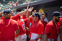 Springfield Cardinals pitching coach Darwin Marrero (36) (center) high-fives players in the dugout on May 19, 2019, at Arvest Ballpark in Springdale, Arkansas. (Jason Ivester/Four Seam Images)