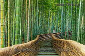Tom Mackie, LANDSCAPES, LANDSCHAFTEN, PAISAJES, photos,+Adashino Nembutsu-ji Temple, Asia, Japan, Japanese, Kyoto, Tom Mackie, Worldwide, bamboo, environment, environmental, footpat+h, forest, green, horizontal, horizontals, landmark, landmarks, nobody, path, pathway, pathways, pattern, patterns, stairs, s+teps, tourist attraction, woodland, world wide, world-wide,Adashino Nembutsu-ji Temple, Asia, Japan, Japanese, Kyoto, Tom Mac+kie, Worldwide, bamboo, environment, environmental, footpath, forest, green, horizontal, horizontals, landmark, landmarks, no+,GBTM190651-1,#l#, EVERYDAY