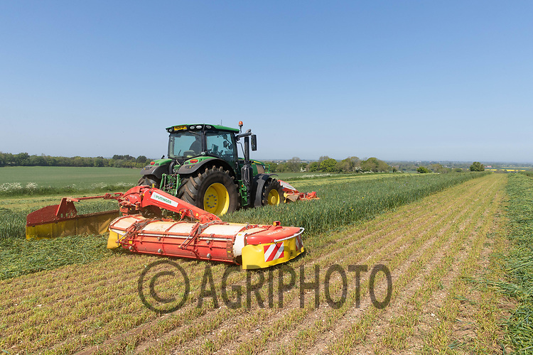 1.6-2021 Mowing whole crop silage<br /> ©Tim Scrivener Photographer 07850 303986<br />      ....Covering Agriculture In The UK....