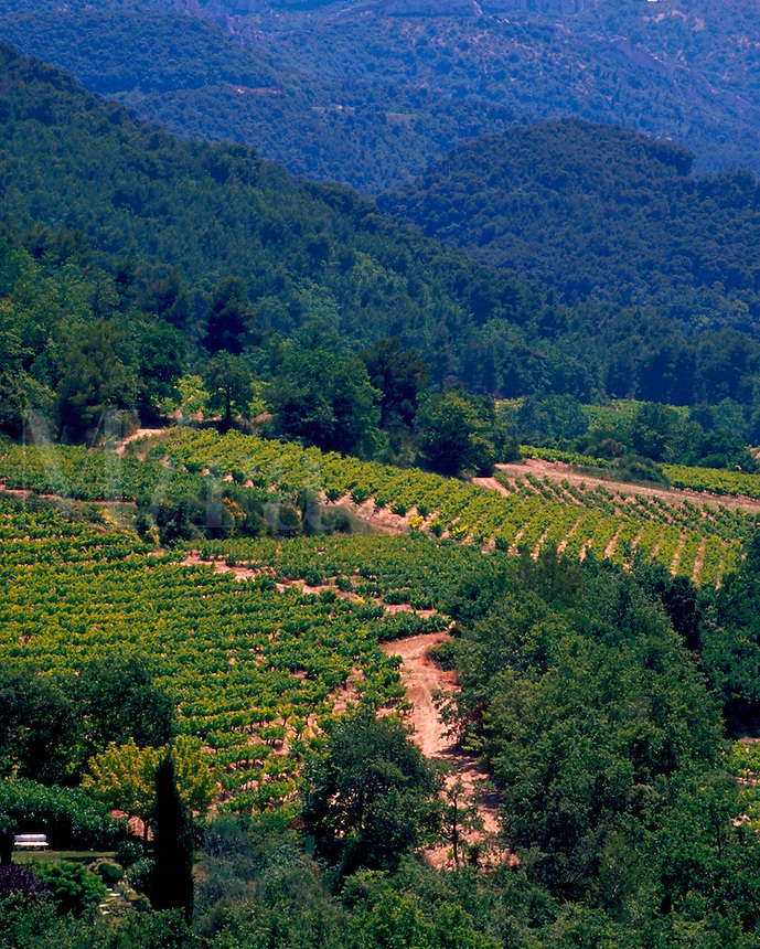 Overview of vineyards with mountain crags in the backgound. France.