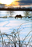 LITCHFIELD, CT. 07  January  2006-010806SV03--At sunset a horse tries to graze through the snow on Rt. 63 in Litchfield Sunday evening.<br />  Steven Valenti / Republican-American