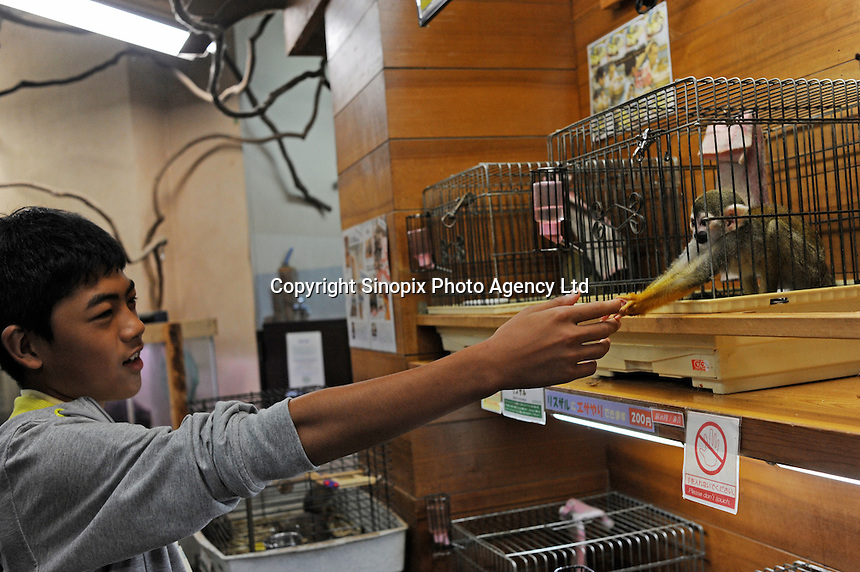 A squirrel monkey grabs a shoppers hand. The monkeys are for sale at 6,235 US$ for a male and 7000 US$ for a female, members of the shop are offeed a 20% reduction. The animals are for sale in the worlds most exotic pet shop called Noah Inner City Zoo. The Noah Inner City Zoo is a pet shop that sells exotic animals. The 'zoo' claims to have more than 300 species for sale, many of which are rare and some are even endangered.