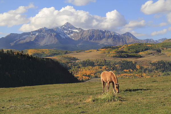 Horse grazing in front of Wilson Peak, San Juan Mountains near Telluride, Colorado, USA.