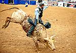 January 2009: Bullrider Josh Call rides Tuff N Ready at the CBR World Championships in Las Vegas