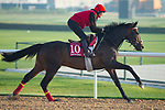 DUBAI,UNITED ARAB EMIRATES-MARCH 29: Prince of Arran,trained by Charlie Fellows,exercises in preparation for the Dubai Gold Cup at Meydan Racecourse on March 29,2018 in Dubai,United Arab Emirates (Photo by Kaz Ishida/Eclipse Sportswire/Getty Images)