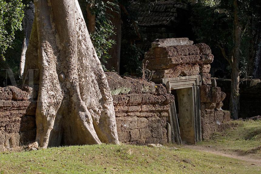 A silk cotton or kapok tree (Ceiba Pentandra) grows over a lava rock wall at Ta Prohm, built by Jayavarman VII, part of the  Angkor Wat temple complex - Siem Reap, Cambodia...