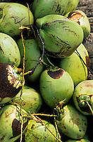 Europe/France/DOM/Antilles/Petites Antilles/Guadeloupe/Pointe-à-Pitre : Marché central - Etal de noix de coco