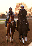 Monomoy Girl, trained by trainer Brad Cox, exercises in preparation for the Breeders' Cup Distaff at Keeneland Racetrack in Lexington, Kentucky on November 3, 2020.