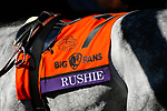 November 7, 2020 :Rushie walks the paddocks before the Big Ass Fans Dirt Mile on Breeders' Cup Championship Saturday at Keeneland Race Course in Lexington, Kentucky on November 7, 2020. Carolyn Simancik/Breeders' Cup/Eclipse Sportswire/CSM