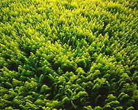 Light and fern patterns along the Appalachian Trail