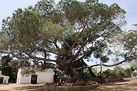 Casa Museo di Garibaldi auf  Isola Caprera, La Maddalena-Archipel (Arcipelago della Maddalena), Provinz Olbia-Tempio, Nord Sardinien, Italien