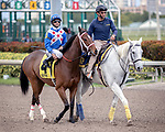 HALLANDALE BEACH, FL - JAN 20:Starship Jubilee #4 with Jose Lezcano on board for trainer Kevin Attard prepares to run and win the $150,000 Sunshine Millions Filly and Mare Turf Stakes at Gulfstream Park on January 20, 2018 in Hallandale Beach, Florida. (Photo by Bob Aaron/Eclipse Sportswire/Getty Images)