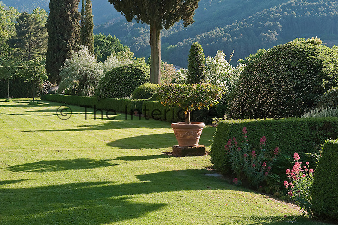 Clipped box hedges run the length of the garden enclosing beds filled with plants and shrubs