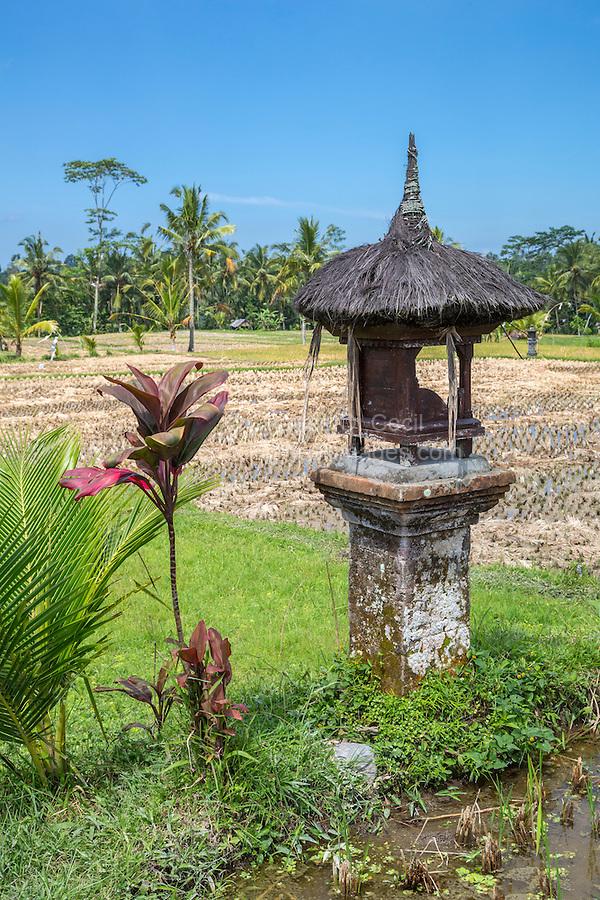Bali, Indonesia.  Shrine to the Rice Goddess Sri in a Rural Rice Field.