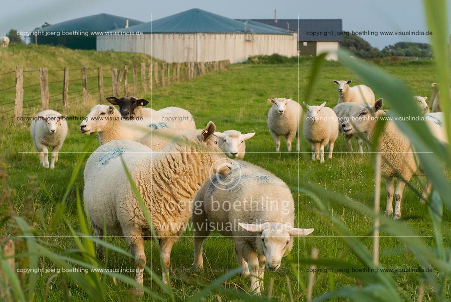 GERMANY, sheeps and Biogas plant at Pellworm Northsea island / DEUTSCHLAND , Schafe vor Envitec Biogasanlage mit Blockheizkraftwerk BHKW zur Stromerzeugung und Waermeerzeugung auf Nordseeinsel Pellworm