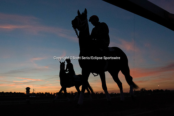 November 5, 2020: A racehorse walks on the track during morning workouts at Keeneland Racetrack in Lexington, Kentucky on November 5, 2020. Scott Serio/Eclipse Sportswire/Breeders Cup/CSM