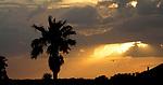 Sunset palm tree bird