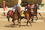 Strapping Groom with Irad Ortiz, Jr. are winners in the 39th running of the  Tom Fool Handicap for 3-year olds and up,  going 6 furlongs on the inner dirt, at Aqueduct Racetrack.  Trainer: David Jacobson. Owner: Drawing Away Stable & David Jacobson.