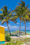 Anegada, British Virgin Islands, Caribbean<br /> A group of palm trees on the edge of a white sand beach at Cow Wreck Bay