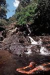 Thailand, Khao Sok National Park, Southeast Asia, woman swimming, jungle pool, waterfall, Susan Johnston,.