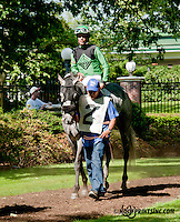 Don Dulce before The Joe French Memorial Stakes at Delaware Park on 6/1/13