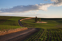 Road Winding Through Green Rolling Hills into Horizon, Eastern Washington, WA, USA.