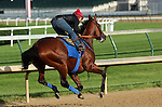 May 26, 2015 American Pharoah (ridden by Martin Garcia) breezed four furlongs in :48, the 5th fastest of 22 works that morning. His splits were :12.2, :24.0, :35.8, with 4F in :48 flat. He galloped out 5 furlongs in 1:00.4 and 6 furlongs in 1:13.2.  He flies to New York on June 2.  ©Mary M. Meek/ESW/CSM