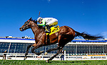 LAUREL, MARYLAND - OCTOBER 22: Head Games #4, ridden by Forrest Boyce wins the opening race on the undercard on Maryland Million Day at Laurel Park on October 22, 2016 in Laurel, Maryland. (Photo by Scott Serio/Eclipse Sportswire/Getty Images)