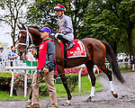 ELMONT, NY - OCTOBER 01: Ectot, #1  with Jose Ortiz aboard. wins the Joe Hirsch Turf Classic  Stakes at Belmont Park on October 1, 2016, in Elmont, NY. (Photo by Sue Kawczynski/Eclipse Sportswire/Getty Images)