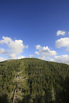 Israel, Jerusalem Mountains, Pine forest on the road to Ein Tayasim